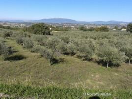 Frantoi Aperti, Giano dell'Umbria